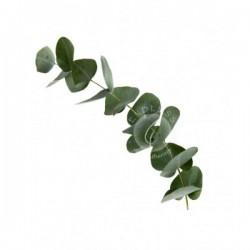 尤加利 Eucalyptus 10ml