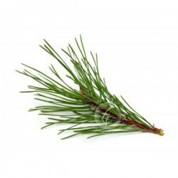 松針 Pine 10ml