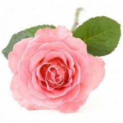 奧圖大馬士革玫瑰 Rose OTTO 5ml